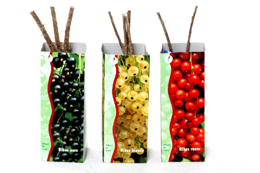 Piante Da Frutto Antiche : Rosai e piante da frutto camaflor