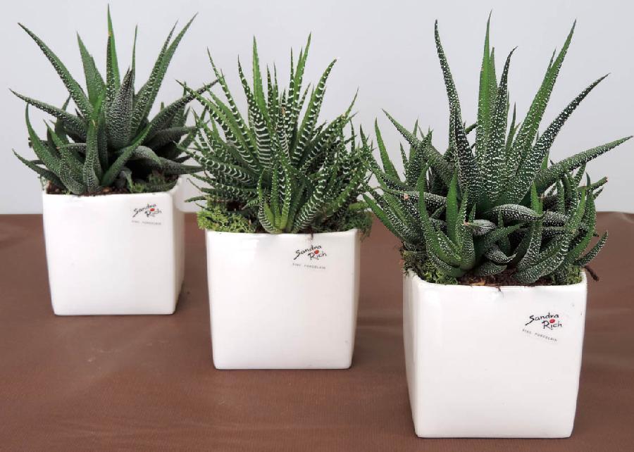 Piante grasse vetro piante grasse nel vetro idee per il - Vasi per piante grasse ...